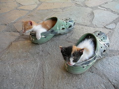 Shoe bed kittens (Phillipaco) Tags: cats cute bed shoes kittens greece crocs peloponnese