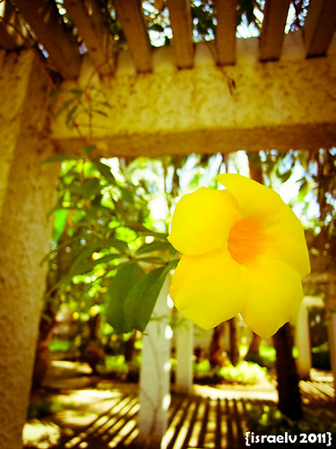 Blooming by israelv