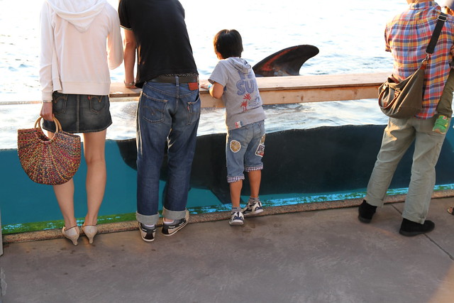 Petting Whales