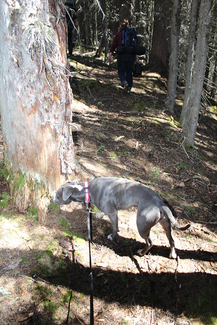 Smidgin On The Trail