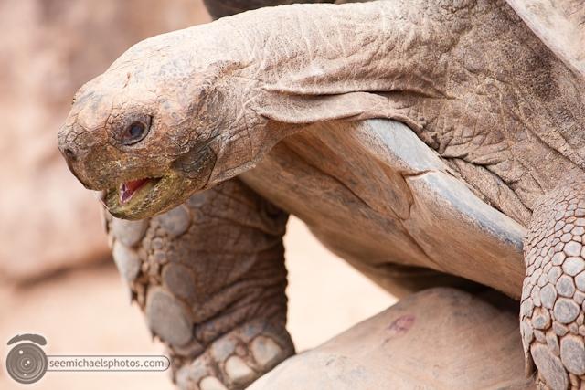 San Diego Zoo 72411 © Michael Klayman-023