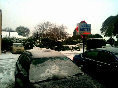 Snowy @ Aloha Motel, Christchurch