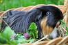 Meerschweinshooting (Dorothee Rund) Tags: garden outside meerschweinchen guinea pig gras garten schwarz korb löwenzahn langhaar
