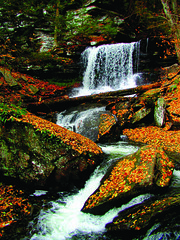 Ricketts Glen State Park (Columbia-Montour Visitors Bureau) Tags: statepark water outdoors falls pa recreation rickettsglen benton columbiacounty