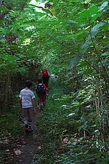 Through the woods on our way to Post 1 (Trekking Rinjani) Tags: mount climbing crater rim lombok rinjani plawangan