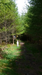 Ruth (Nevica) Tags: trees shadow woods lakes lakedistrict windermere ih