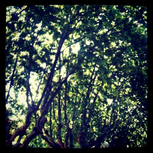 Si sólo ves los árboles, no verás la luz del sol entre las ramas by rutroncal