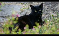 Avverto un invasore... (Susy Maglione) Tags: pentax natura felini gatti animali