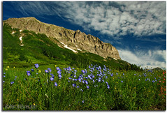 Spirit Of Colorado 2011 (Robin-Wilson) Tags: colorado wildflowers crestedbutte blueflax gothicmountain gothicroad