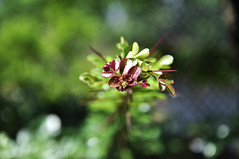 new life [explored] (e.nhan) Tags: life light green art nature leaves closeup dof bokeh backlighting enhan