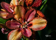 A Bit of Color (Nebswanny1) Tags: flower nebraska omaha heronhaven