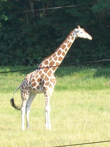 Zoo - 7-17-11 020