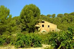 Masia i vinya. (Angela Llop) Tags: landscape spain eu catalonia vineyards catalunya laltcamp
