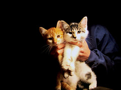 Baby Boy and Baby Girl (Morna Crites-Moore) Tags: cats animals kittens kitties