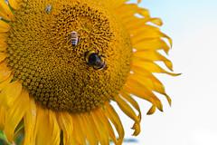 PIANO..C'E' POSTO X TUTTI!!! (zagor64.) Tags: fiori colori animali marche sanbenedettodeltronto anawesomeshot obietivonuovo macrospinto zagor64