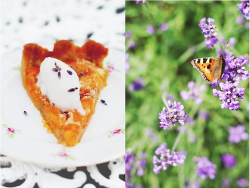 lavender & apricot