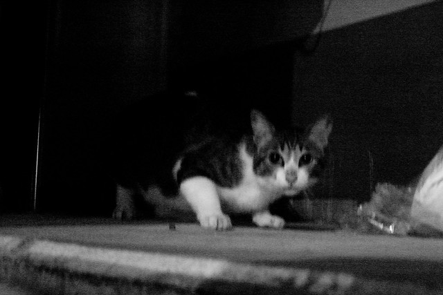 Today's Cat@2011-07-12