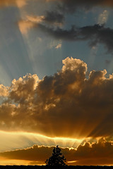 Goodbye from my beloved clouds (Robyn Hooz) Tags: roof sunset colors pine clouds canon eos golden tramonto nuvole tetto rays pino colori beams beloved padova raggi padua dorato fasci adorate 550d efs18135is
