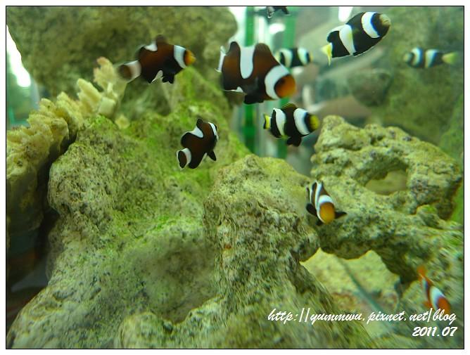 110711小丑魚主題館 (6)