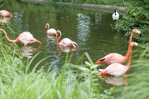flamingos...mm's favorite