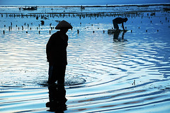 Seaweed farmer @ Lembongan Island, Bali (Tempo Dulu) Tags: blue sea bali silhouette indonesia ripples lembongan jungutbatu beautifulbali