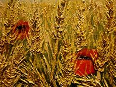 "Detail  wheatfield (Iacolino Marcaurelio ""Il colorista"") Tags: life summer detail yellow work bread estate farmer pane flour vita elegance lavoro wheatfield farina contadino eleganza raccolto gialloharvest"