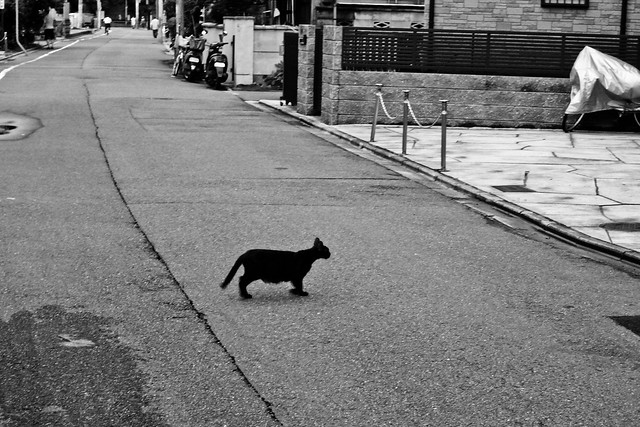 Today's Cat@2011-07-20