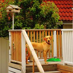 dog fishing village sweden birdfeeder hund sverige gullholmen fiskeläge fågelbord mygearandme