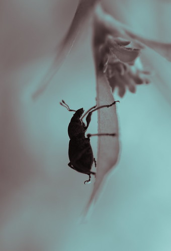 Bug by cottonbud_design