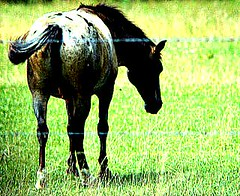 """Horse  """"Galope"""" (Ken's Eye Saved by Grace) Tags: galope"""