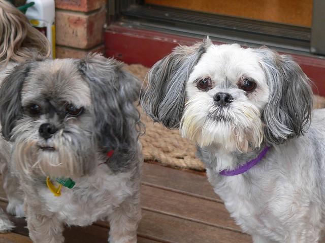 Rosie & Daisy