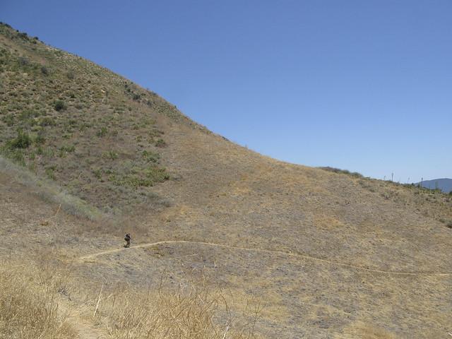 Grassy wasteland