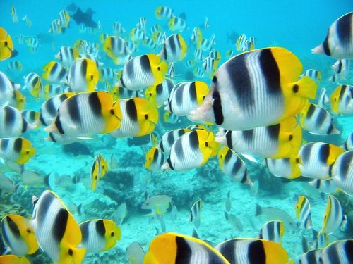 Snorkelling, Snorkel, Things To Do Before You Die, Bucket List