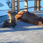 "Sea Lions <a style=""margin-left:10px; font-size:0.8em;"" href=""http://www.flickr.com/photos/14315427@N00/5981811342/"" target=""_blank"">@flickr</a>"