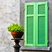 predominant green