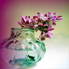 COLOR COMBO (littlefeather100 / Off) Tags: pink flowers copyright stilllife flower washington teal magenta explore vase paragon motat personalfave colorcombo sedrowoolley acdsee explored idream frontpageexplore madeexplore tatot boxofhappymemories magicunicornverybest magicunicornmasterpiece sailsevenseas coppercloudsilvernsun sbfmasterpiece pinnaclephotography stilllifephotoart sbfgrandmaster gallerydancingpeaock
