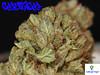Church Close Up1 (Humboldt Relief) Tags: church losangeles weed 420 pot marijuana herb cannabis ganja medicalmarijuana medicalcannabis cannabisindica humboldtrelief