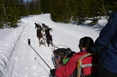 XShot_Dog_Sleigh_Oregon2009