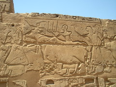 Bull with human as horns (konde) Tags: ancient egypt bull relief luxor luxortemple newkingdom 19thdynasty