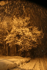 snowfall in streetlight (desert sky at night) Tags: winter night snowflakes snowfall hakuba sigma18200