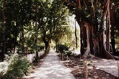 (Monica Forss) Tags: italy italia sicily palermo botanicalgarden sicilia