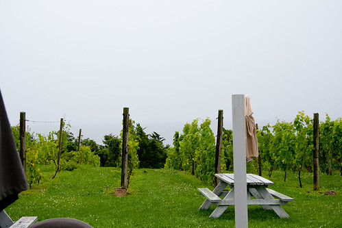Vineyard out back