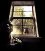 Persistence of Self (Proleshi) Tags: morning light window self myself creativity naturallight tokina imagination clone duplicate duplicity persistance windowlight multiply 111628 d300s proleshi jamaljosephs myselfisafterme