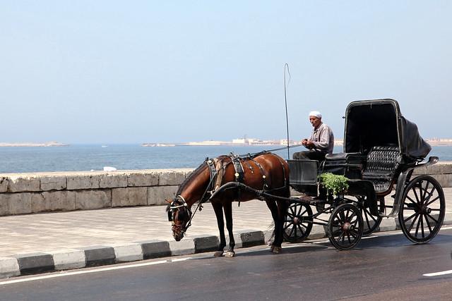 エジプト、アレキサンドリア、海岸を走る馬車
