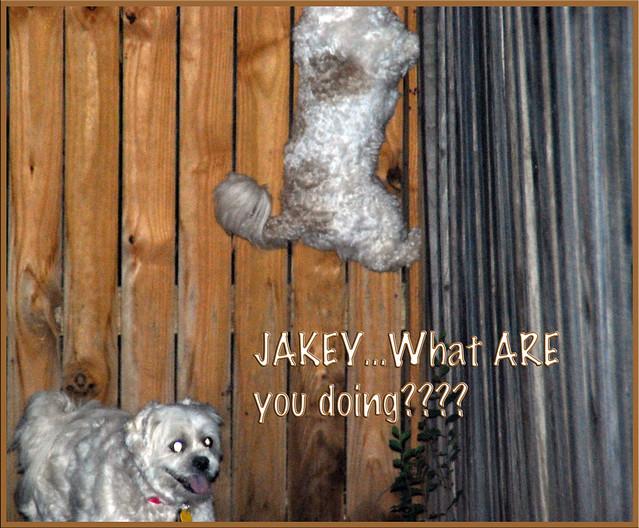 Jakey-Jump
