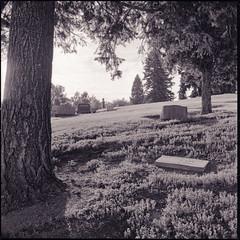 littleton cemetery (mike thomas) Tags: 120 film cemetery mediumformat kodak 64 150 hasselblad rodinal contrejour planar plusx 80mm 10minutes r00070