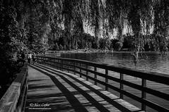 Lines (Alex Cejka Photography) Tags: summer blackandwhite bw lake ontario canada water lines milton kelso halton