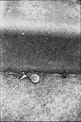0424 (nori 4_4) Tags: blackandwhite bw film monochrome japan analog snail d76 m42 hp5 analogue 13 fujisawa  selfdevelopment  bessaflextm pentacon5018