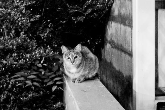 Today's Cat@2011-10-03
