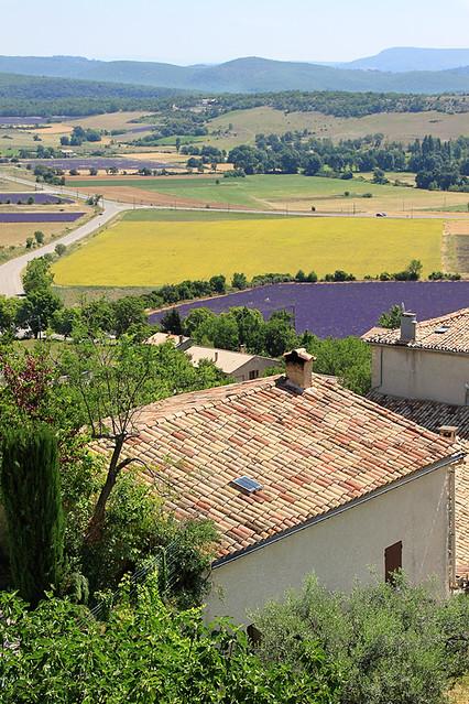 Lavender1